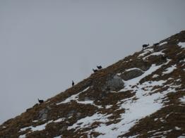 Mountainspace - Grignone magic line P1080785