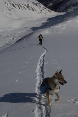 Grieshorn scialpinismo - canale nord (1)