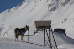 Grieshorn scialpinismo - canale nord (2)