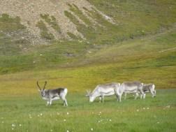 Giacomino longhi - Svalbard - trekking articiP1090471