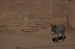 Giacomino longhi - marocco sci deserto dune trekking IMG_1718