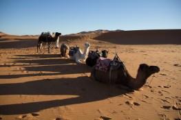Giacomino longhi - marocco sci deserto dune trekking IMG_2256