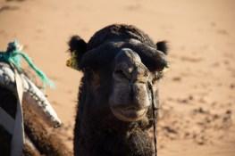 Giacomino longhi - marocco sci deserto dune trekking IMG_2257