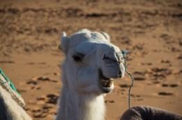 Giacomino longhi - marocco sci deserto dune trekking IMG_2259