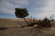 Mountainspace - Giacomino longhi - marocco sci deserto dune trekking IMG_1980