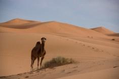 Mountainspace - Giacomino longhi - marocco sci deserto dune trekking IMG_1992