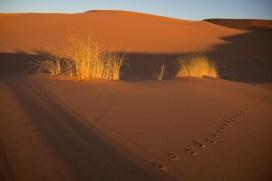 Mountainspace - Giacomino longhi - marocco sci deserto dune trekking IMG_2176